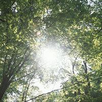 視力回復~森林01.jpg
